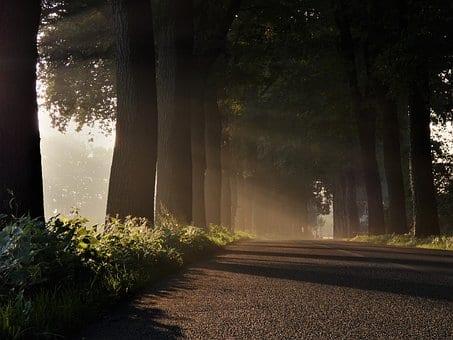 aleja, droga z drzewami